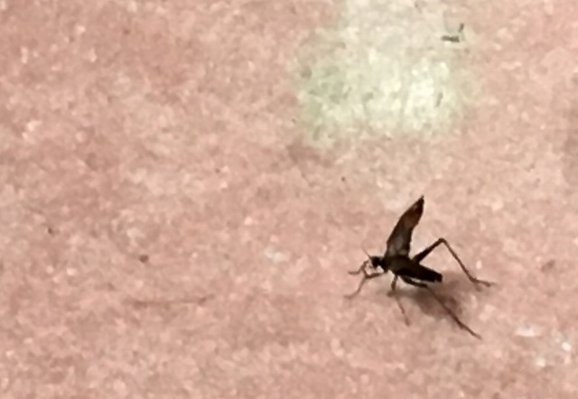 床で鳴く鈴虫1匹